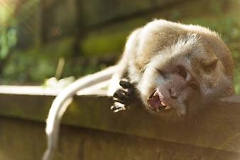 Monos en Ubud Bali