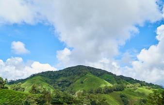 Montaña con arboles y arbustos y nubes
