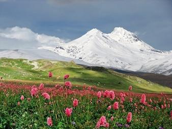 montañas cubiertas de nieve de material fotográfico flores