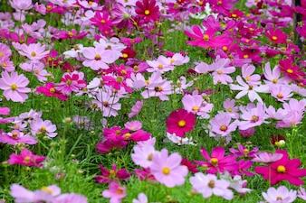 Muchas flores lilas y rosas