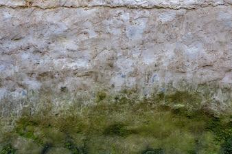 Muro de cemento con musgo