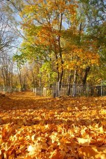 Nadie otoño