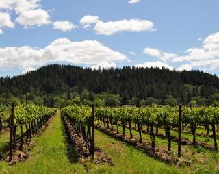 Napa de viñedos de uvas