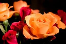 Naranja y flores rojas