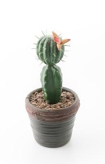 Natural, naturaleza, hoja, cactus, jardín