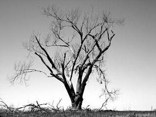 naturaleza árbol muerto