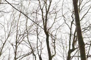 Naturaleza árbol silueta