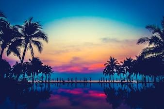 Naturaleza palma piscina océano paisaje