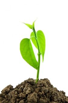 Naturaleza temporada de crecimiento verde
