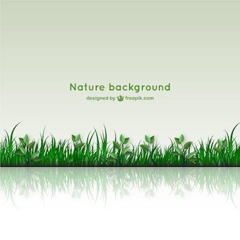 Fondo de naturaleza con imagen reflejada en el suelo