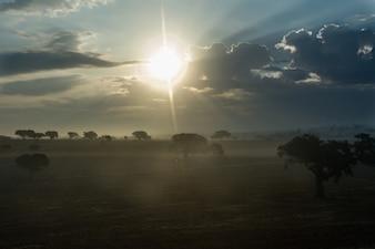 Niebla de la mañana y el sol naciente