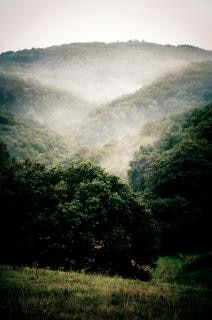 Niebla paisaje