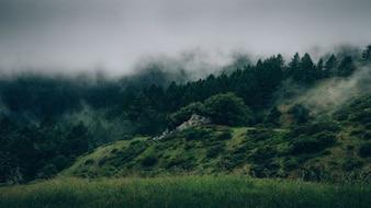 Niebla por encima de los árboles