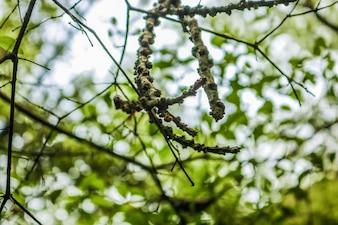 Nueva rama fresca del brote que crece verde