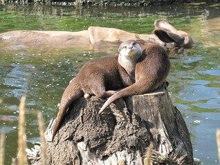 nutria juntos zoológico la vida rinoceronte