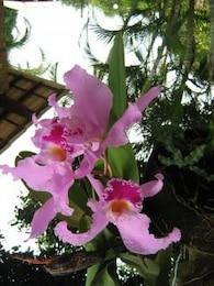 orquidea, natureza