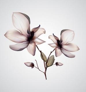 Orquídea flor linda vector