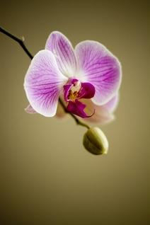 orquídea planta flor flora floristería preciosa naturaleza