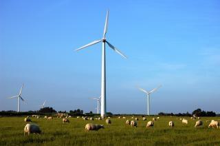 ovejas y molinos de viento