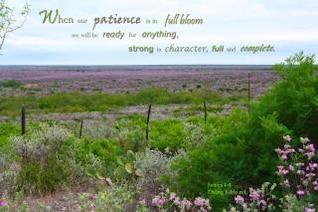 paciencia en plena floración