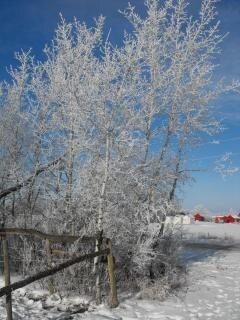 país de las maravillas del invierno, país de las maravillas