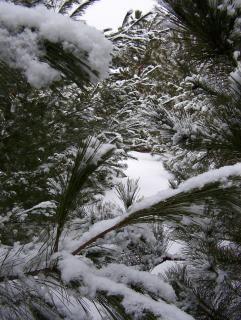País de las maravillas del invierno, árbol