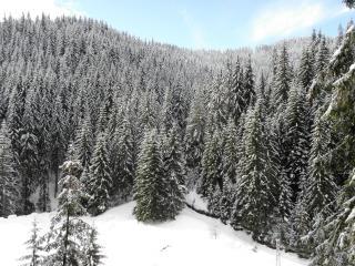 País de las maravillas del invierno en el centro de Rodopi, Rhodopi