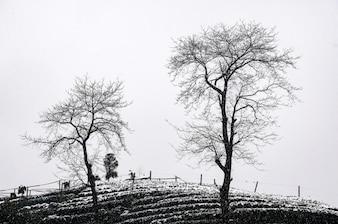 Paisaje con dos árboles en blanco y negro