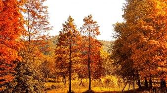 Paisaje natural en colores cálidos