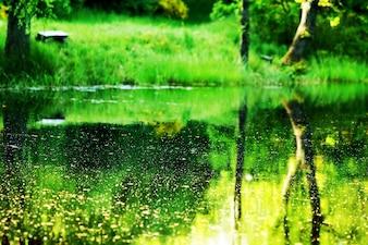 Paisaje natural reflejado en el agua