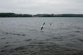 Paisaje nublado con gaviotas volando
