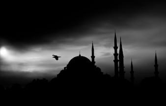 Paisaje oscuro con pájaro volando