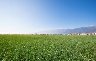 Paisaje verde en una granja