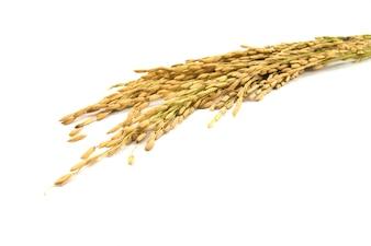 Paja de nutrición de los cultivos de plantas agrícolas