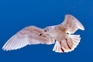 Pájaro brillante
