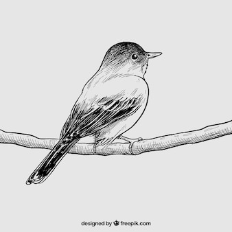 Pájaro drenado mano