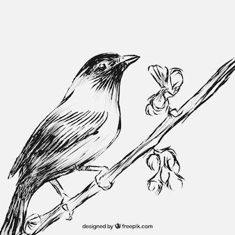 Pájaro esbozado en la rama