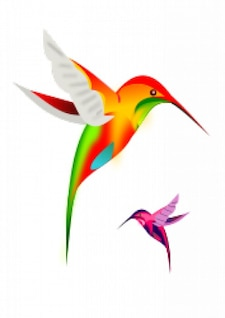 pájaros colibrí