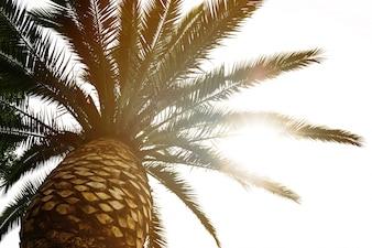 Palma hermosa con el día soleado de la viga de luz. Viraje. Concepto De Las Vacaciones. Vista desde abajo. Desfocado. Borroso.