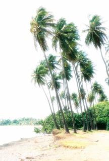 palmas niebla