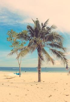 Palmera de coco y kayaks en la playa con efecto de filtro retro