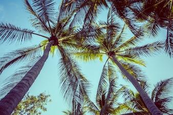 Palmera del coco