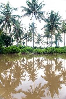 Palmeras reflejadas en el agua