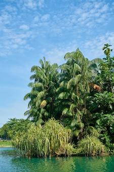 Palmeras y arbustos sobre un lago
