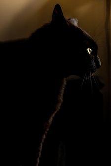 Gato de pantera