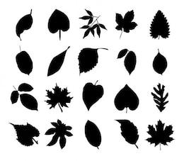 Paquete de siluetas de flores negro de vectores
