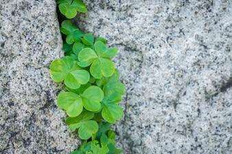 Pared de piedra vieja con las hojas.
