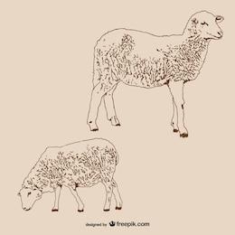 Pareja de corderos