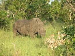 Parque nacional rinoceronte safari