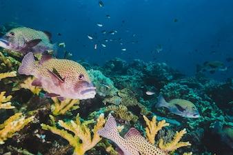 Peces tropicales sobre coral